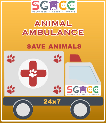 animal ambulance